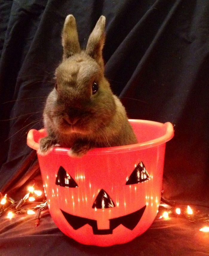 представлении картинки приколы кролик сдача