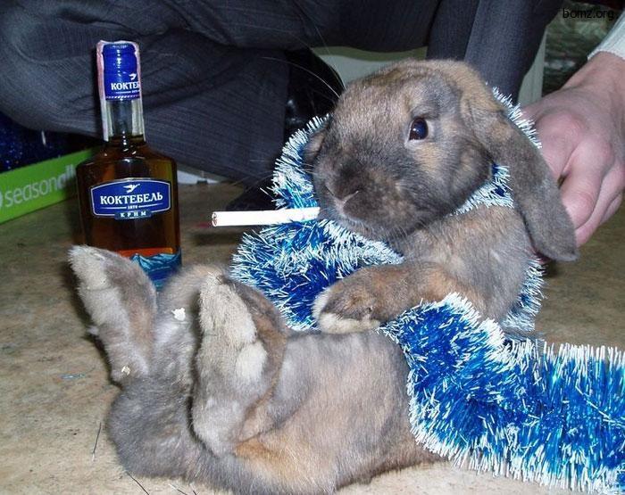 жизни творческой приколы про кроликов картинки положите футболку морозилку