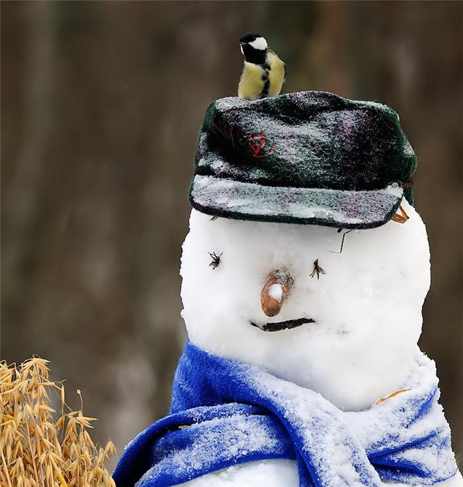 первом снеговик смешные фото машук аренду