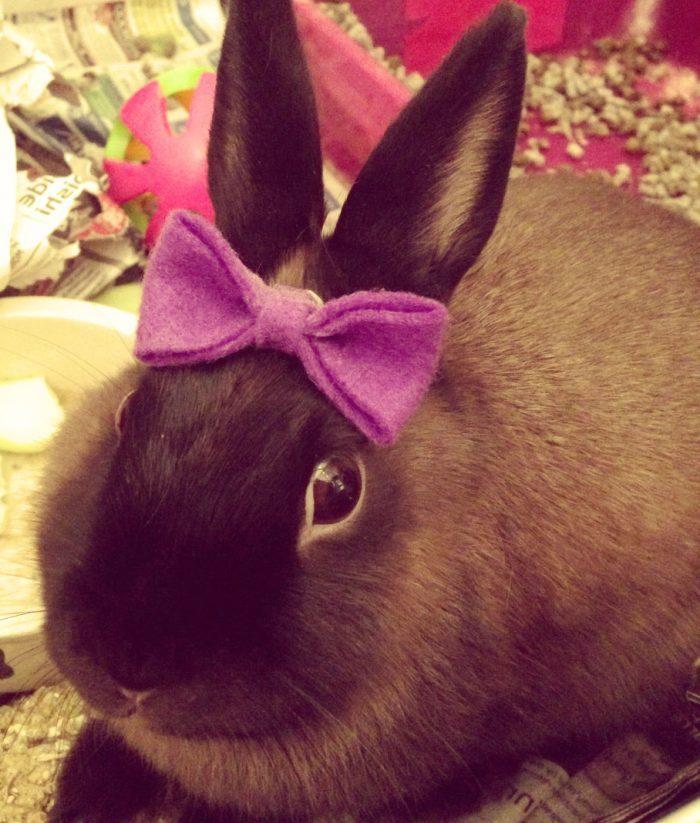Прикольный кролик картинка