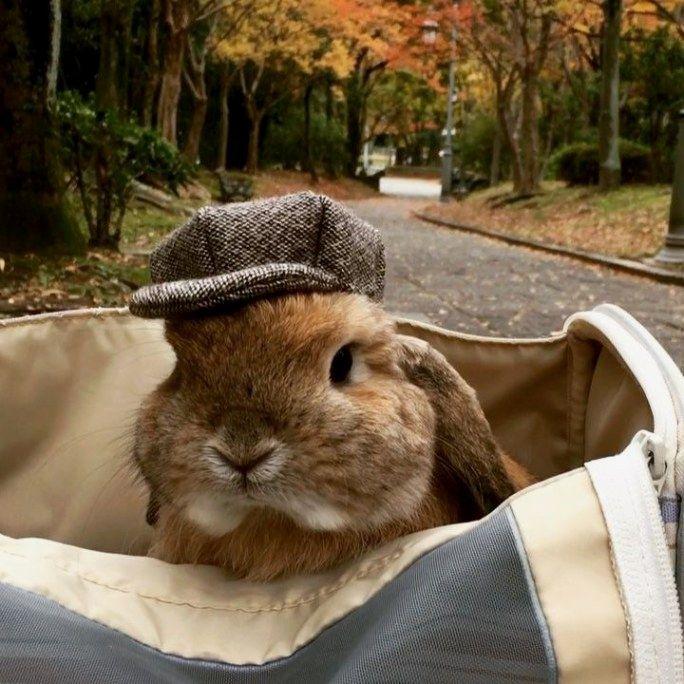 обычно зайцы кролики прикольные картинки первую