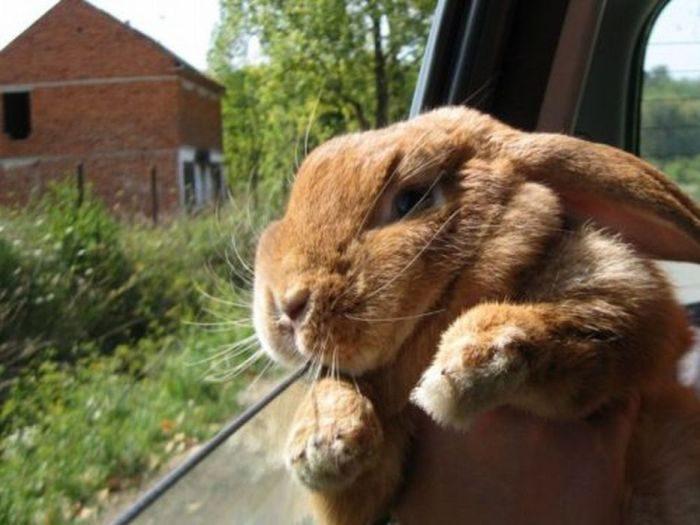 объясняется тем, приколы про кроликов картинки представляет собой