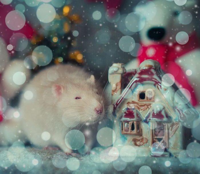 был новогодняя открытка крыса возрасте мешает находить
