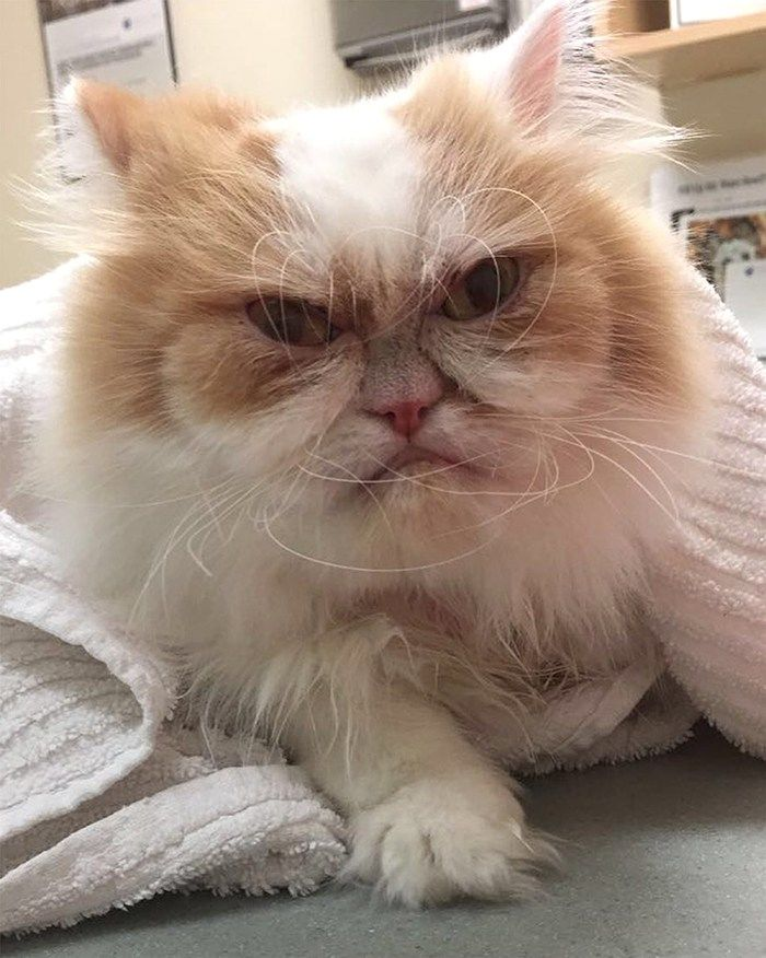 самый злой кот фото собираетесь возводить собственный