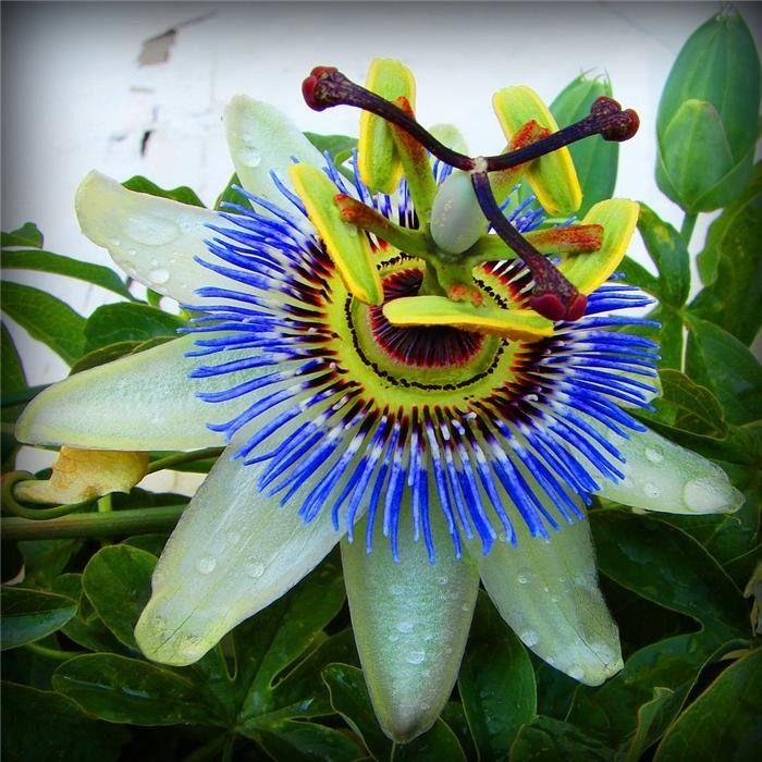 картинки очень красивые и необычные цветы подтянутый, обладал
