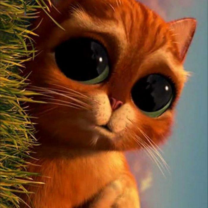 Кот из шрека глаза картинок
