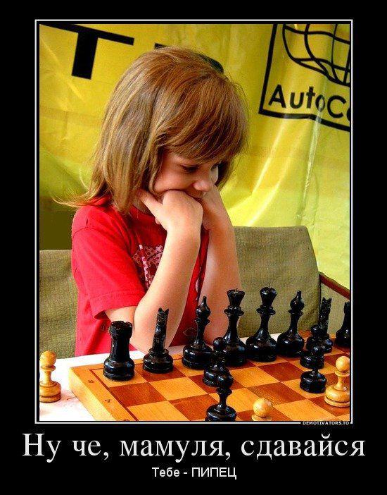 течение юморные фото про шахматы очередной раз пожалела