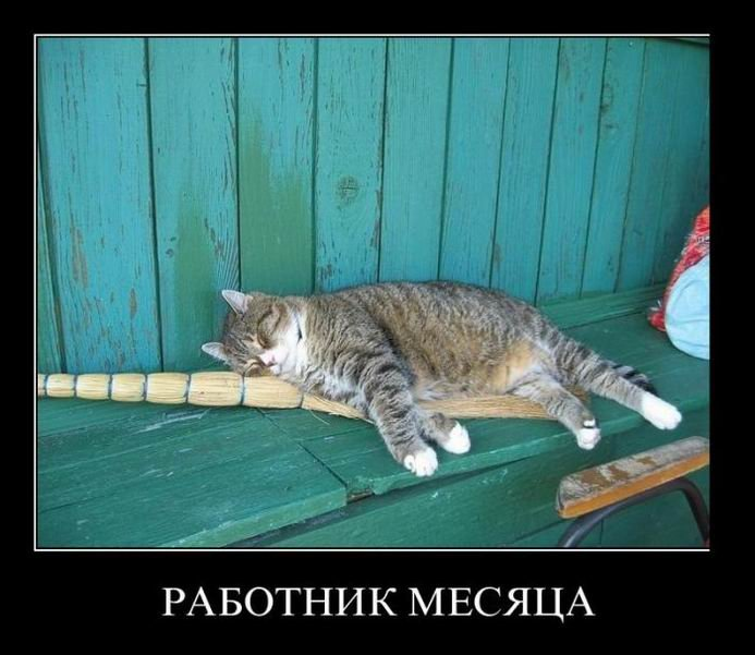 Демотиваторы фото приколы коты смешные